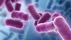 """""""بانٍ بروتيني"""" يختبر لمعالجة السرطان"""