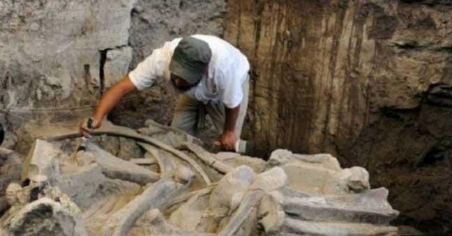 العثور على بقايا ماموث في المكسيك عمرها 14 ألف عام
