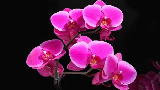 علماء روس يكتشفون مضادات للسرطان في أزهار الأوركيد