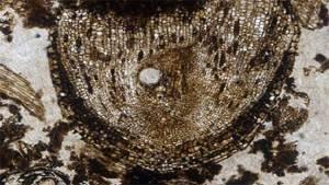 اكتشاف خلايا جذعية عمرها 300 مليون سنة