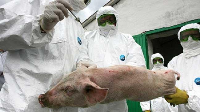 """من أين أتت """"إنفلونزا الخنازير""""؟"""