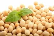 الصويا تحسن مستويات الأنسولين والكوليسترول عند المصابات بالسكري