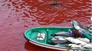 اليابان وتقليد قتل الدلافين