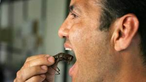 هل تنقذ الحشرات البشر من الجوع؟!