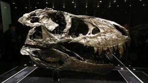 علماء: الديناصورات كانت قادرة على تمييز الألوان