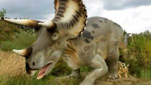 حيوان زاحف برأس مطرقة جاب مروج تكساس