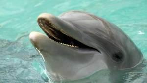 الدلافين تستخدم في حديثها كلمات وجمل كاملة