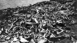مقبرة لحيوانات الماموث تكتشف في سيبيريا