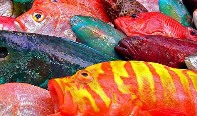 الأسماك الملوثة مصدر رئيس للتسمم بالزئبق