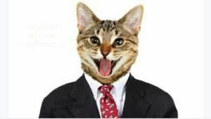 فيسبوك يعطل حساب من يتشارك صورة هذا القط