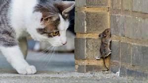 العلماء يسمعون أغاريد الفئران