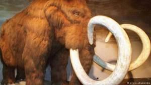 دراسة: انقراض الثدييات الضخمة يضعف خصوبة التربة
