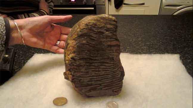 اكتشاف يقلب الموازين .. سن ماموث عمره 3 ملايين عام