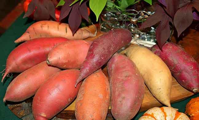 البطاطس أم البطاطا الحلوة… أيها مفيد للصحة؟