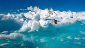 أكبر محمية بحرية في العالم في القطب الجنوبي