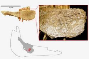 العثور على أقدم أثر لوجود الإنسان في أمريكا الشمالية