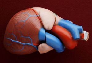 """نجاح اختبارات جهاز """"يلتف"""" حول القلب ويضخ الدم"""