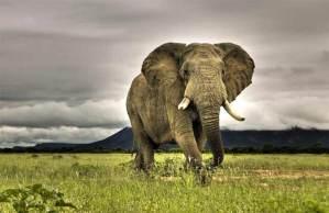 أقل الحيوانات البرية نوما على الأرض