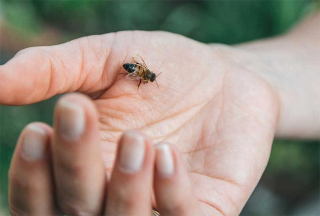 علاج الاضطرابات الروماتيزمية بسم النحل