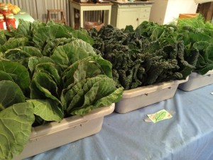 Collards and Kale.