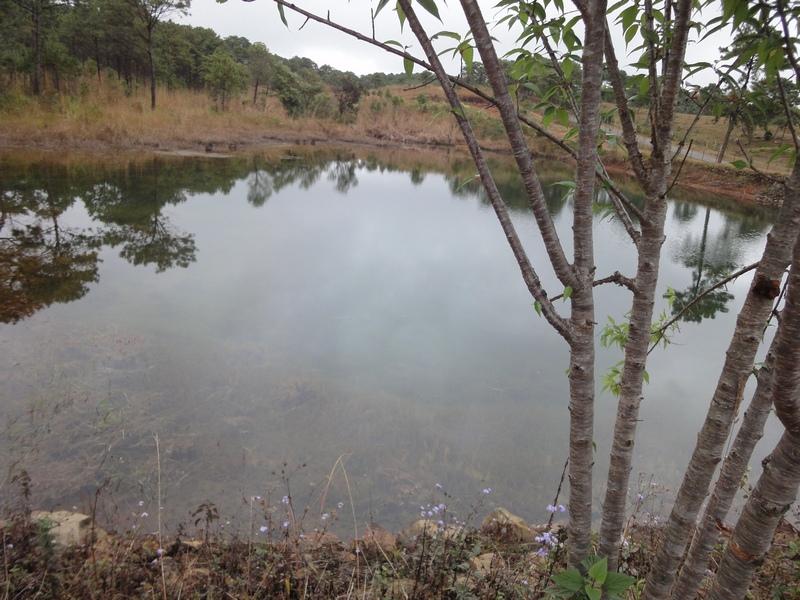 Sacred Grove in Meghalaya (2/6)