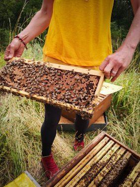 A la découverte de la ruche et de ses habitantes