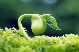 little seed tash mcgill