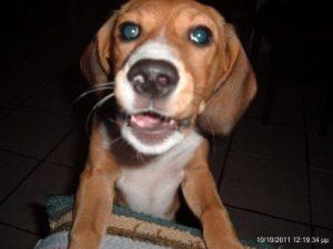 ανέκδοτα με σκύλους