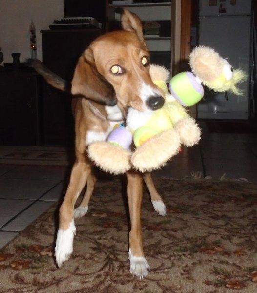 Ποιο παιχνίδι προτιμά ο σκύλος σας