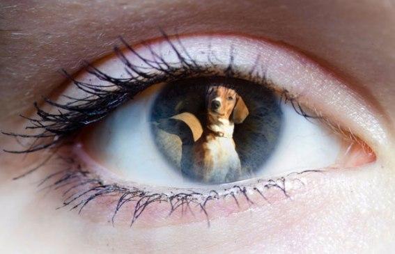 ψυχολογία σκύλων, σκέψεις