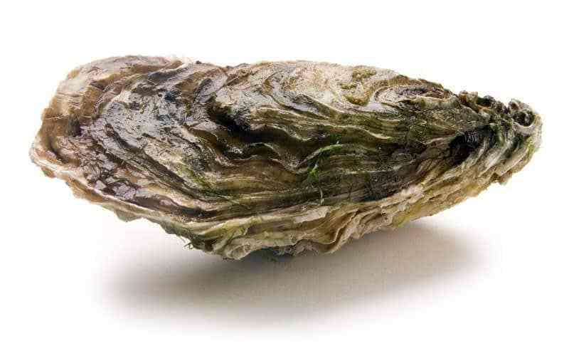Machine brevetée mesurant le stress des huîtres perlières