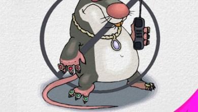 طرق بسيطة وفعالة في التخلص من الفئران في منزلك دون اللجوء للمواد الكيميائية