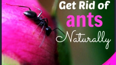 وصفات طبيعية تساعدك في القضاء على النمل من منزلك وكل حشرات الصيف