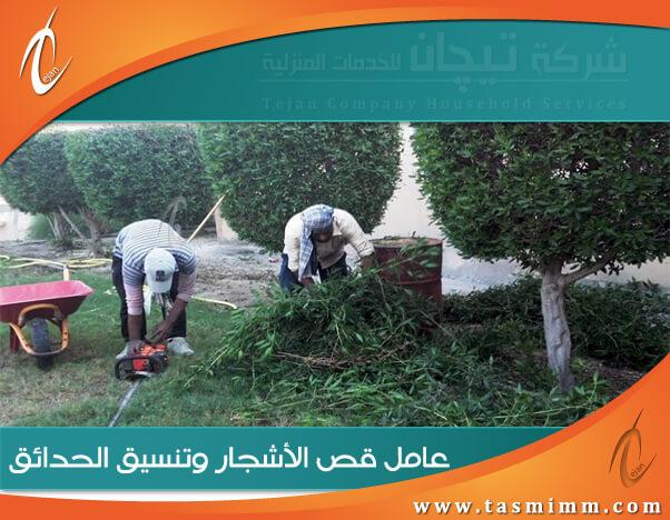 عامل قص اشجار بابها محترف & أفضل شركة ازالة اشجار بابها وتجميل الشجر بأقل سعر