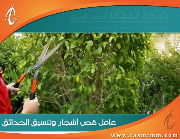 عامل قص اشجار بخميس مشيط & أفضل شركة ازالة اشجار بخميس مشيط وتقليم الاشجار واشجار الزينة