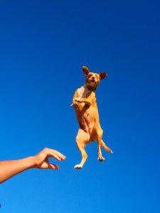 Passiivisella venyttelyllä tarkoitetaan venyttelyä, joka tehdään jonkun muun kuin koiran aloitteesta