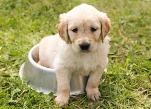 Koiran liikkumisen hidastuminen kuukausien kuluessa voi ikääntymisen lisäksi johtua vakavasta sairaudesta tai pitkäaikaisesta kivusta.