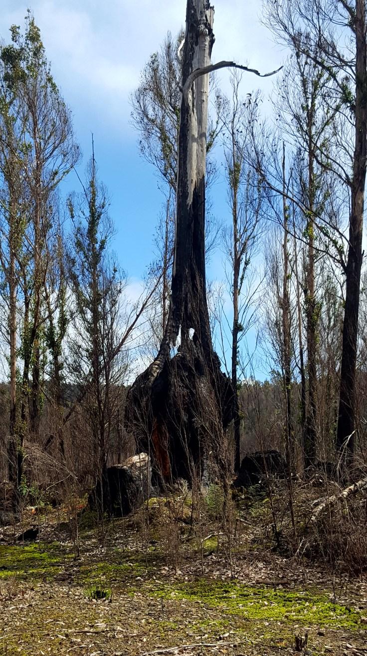 interesting-tree-2