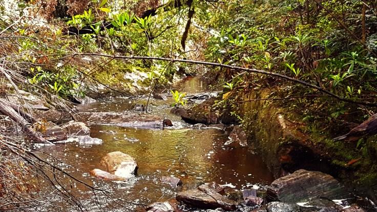 bonus-falls-downstream