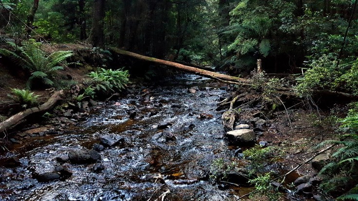creek-camp-1