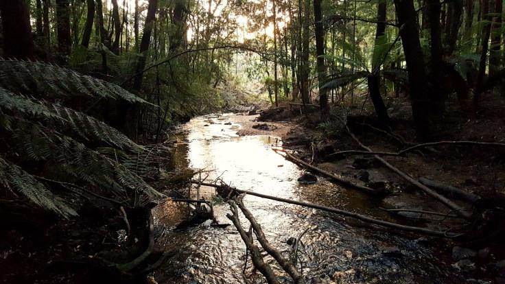 creek-camp