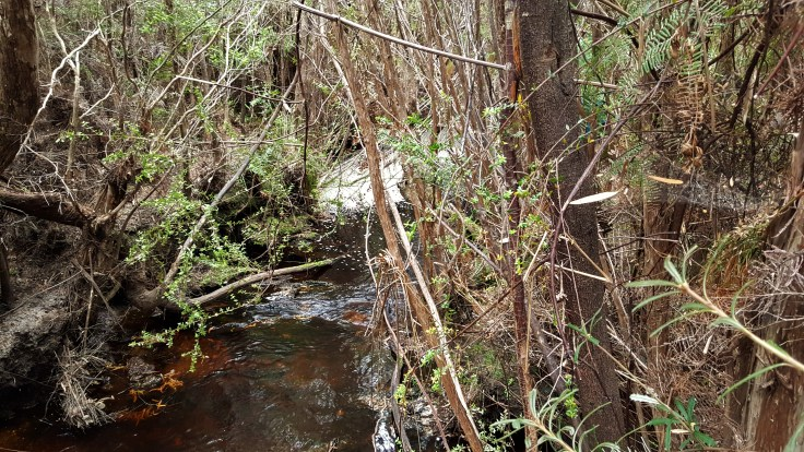 suprise-creek