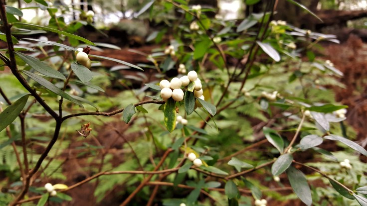 white-berries