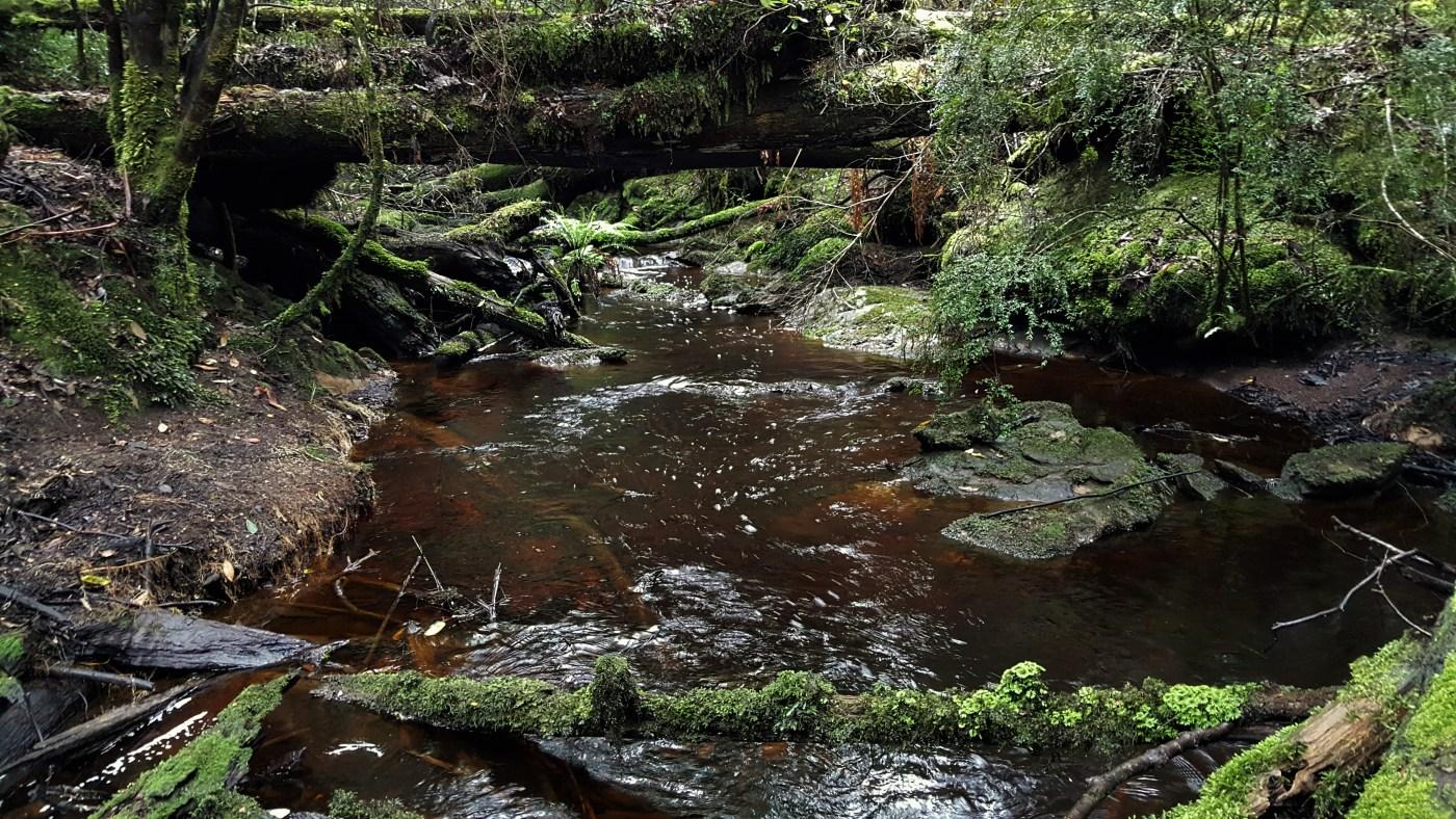 swallet inlet 2 - Hawkes Creek Swallet
