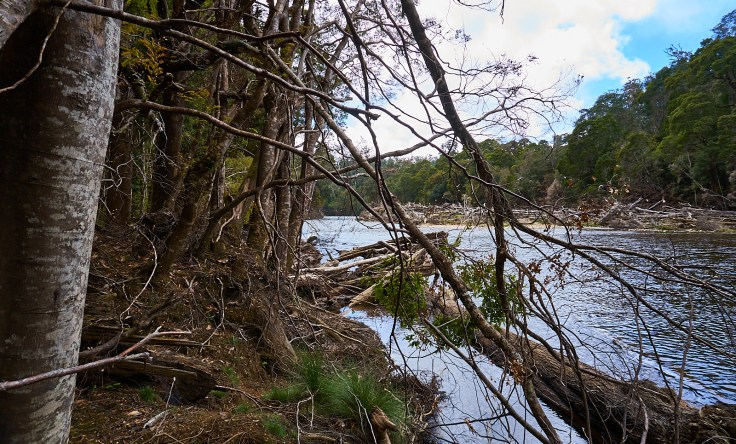 Arthur River Logs