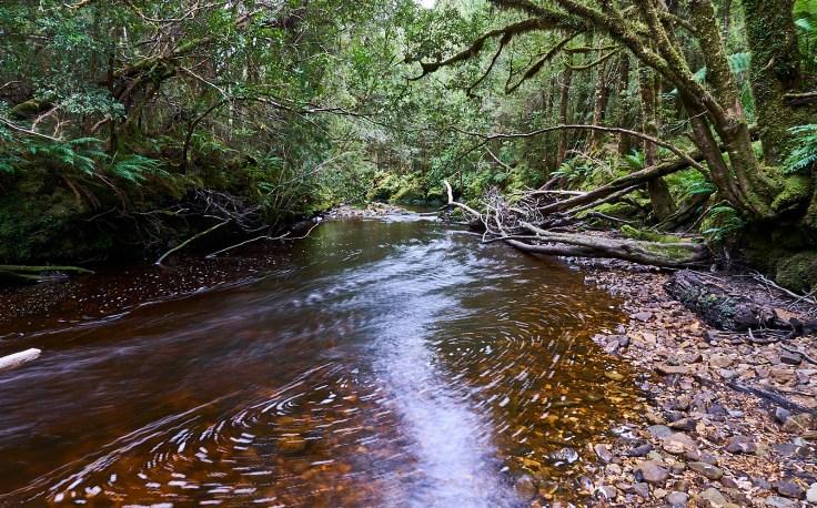 Bird River 1