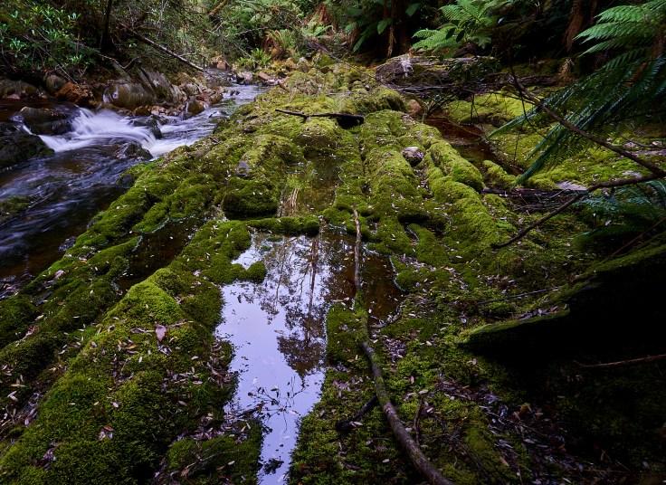 Cann Creek 1 1