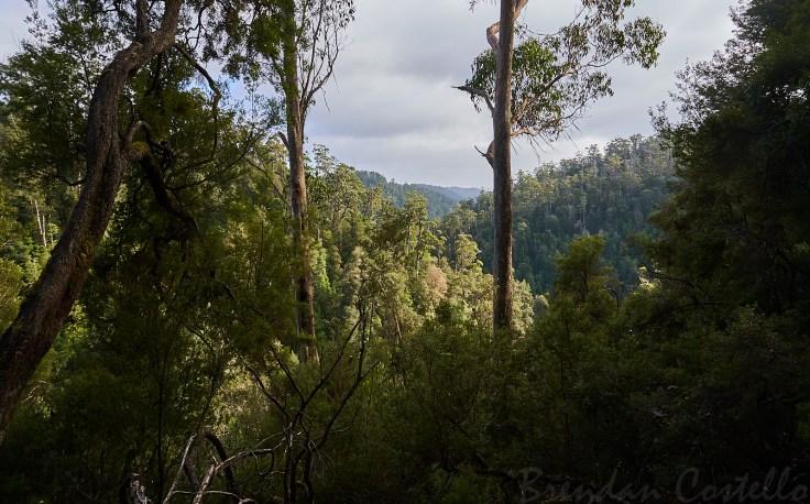 Atlas Creek Valley 1