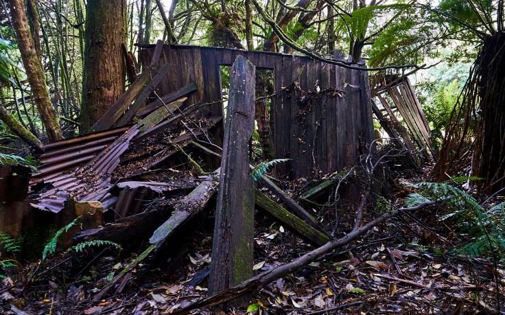 Old Loggers Hut 1
