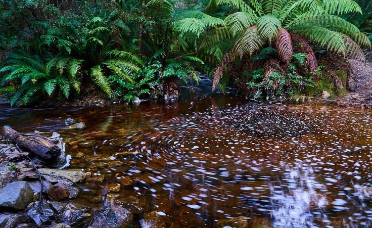 Narrawa creek 1